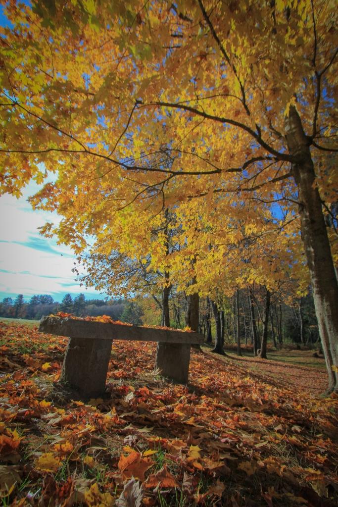 Benchside Foliage