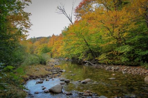 Hermit Woods Colors-5