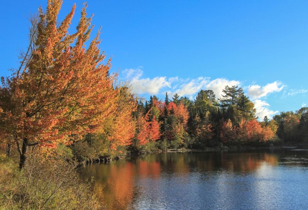 Hermit Woods Colors-8