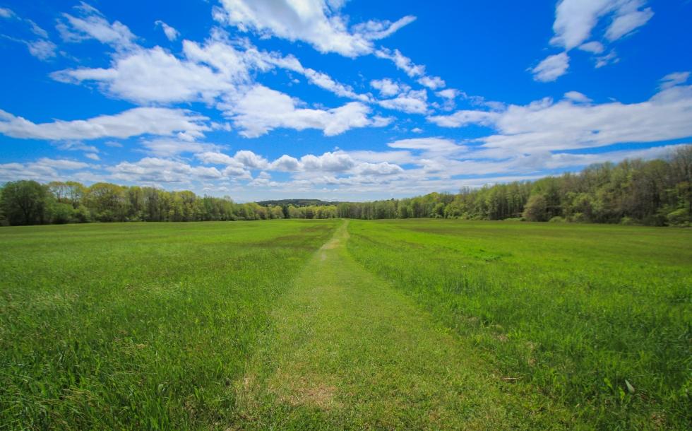 Tattersall Farm Field of Green 2