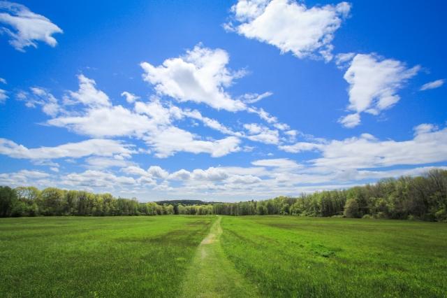 Tattersall Farm Field of Green